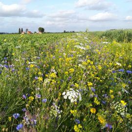 Agrarisch bijenlandschap in eerste jaar op de kaart gezet