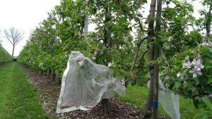 'Wageningen' onderzoekt de agro-ecologie voor De Fruitmotor