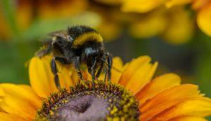 Bijen helpen telers, telers helpen bijen