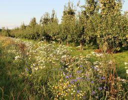 Betuwse boeren aan de slag met natuurinclusieve landbouw